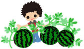 Cultivating watermelons — Stock Vector