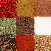 Colorful Spices — Stock Photo