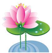 Lotus,vector — Stock Photo