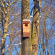 Large wooden nesting-box hanging on tree blue sky — Stock Photo