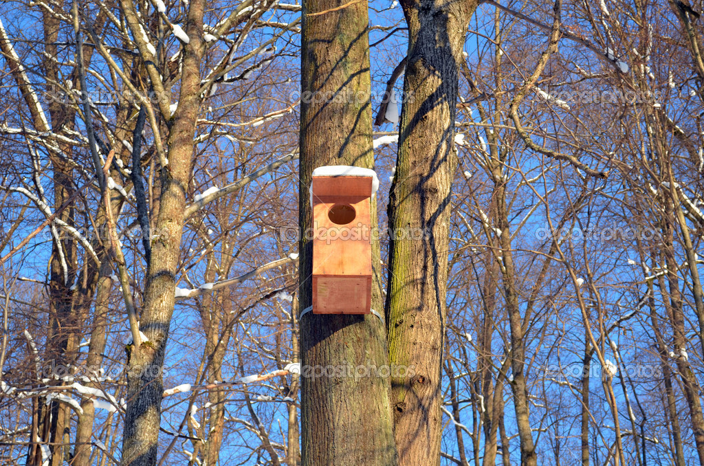 Large wooden nesting-box hanging on tree. Snowy trees without leaves on background of blue winter sky. — Stock Photo #10775508