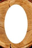White oval photo frame texture of cut oak backdrop — Stock Photo