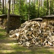 Pile of chopped stack firewood wood forest trees — Stock Photo #11418395