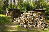 Pile of chopped stack firewood wood forest trees — Stock Photo