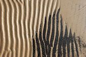 Sea shore fragment. — Stock Photo