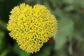 Blooming heart — Stock Photo
