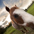 Sunset Horse - Stock Photo