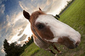 Sunset Horse — Stock Photo