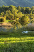 Trees, grass, water, reflections. — Stock Photo