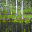 Reflection of small trees in pond. — Stock Photo