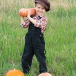 Smiling boy with pumpkins — Stock Photo