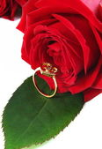 Ring with rose — Foto de Stock