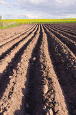 Ploughed agriculture field for potatoes — Stock Photo