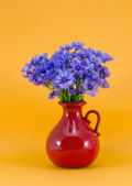 Blue cornflowers in the red jug — Stock Photo
