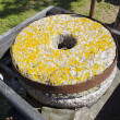 Stock Photo: Ancient millstone with yellow lichens
