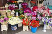 Various summer flowers market — Stock Photo