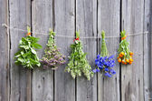 Various medical herbs on wooden wall — Stock Photo