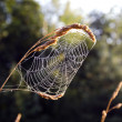 Royalty-Free Stock Photo: Summer end spider web in morning light