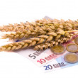 Isolated wheats harvest ears and euro - Stock Photo