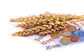 Isolated wheats harvest ears and euro — Foto Stock