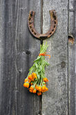 Rusty horseshoe and calendula herb bunch on wall — Stock Photo