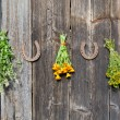 图库照片: Medical herb bunch on wooden old wall