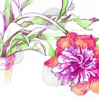 Stock Photo: A sketch of a flower peony