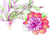 A sketch of a flower peony — Stock Photo