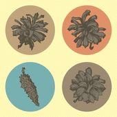 Set of spruce cones — Stock Vector