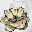 Rose flowers, hand-drawing. Vector illustration. - Imagen vectorial