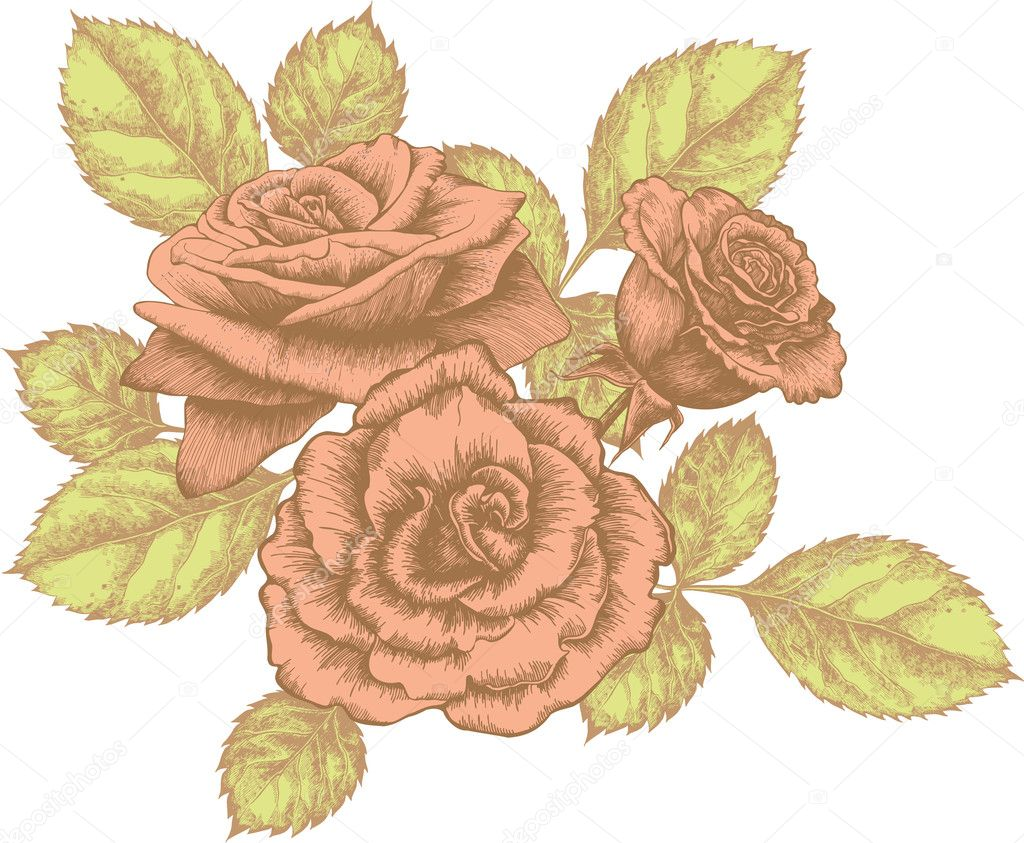 Rose Bouquet Drawing Bouquet of Blooming Roses