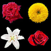 Set of four flowers — Stock Photo