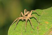 Pavouk — Stock fotografie