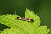 Closeup Moths — Stock Photo