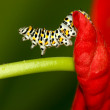 Insects on colorful plant in wild — Stock Photo #12369974