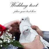 Wedding doves — Foto Stock