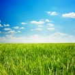 Green grass and blue sky — Foto de Stock