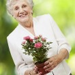 Senior woman holding a flower pot against a nature background — Stock Photo