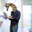 Man Using Laptop With Giraffe Head — Stock Photo