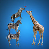 Zebra And Giraffe — Stock Photo