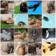 Collection Of Animals - Foto Stock