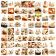 Collection Of Mushroom - Stock Photo
