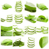 Set Of Aloe — Stock Photo