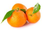 Mandarini freschi — Foto Stock