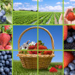 Stock Photo: Berries collection collage