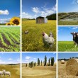 Agricultural concepts collage — Photo