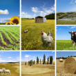Agricultural concepts collage — Foto Stock