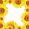 Sunflowers frame card background — Stock Photo