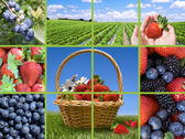 Berries collection collage — Stock Photo