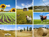 Agricultural concepts collage — Stock Photo